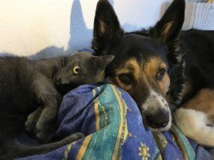 Tiernahrung für Ihr Haustier