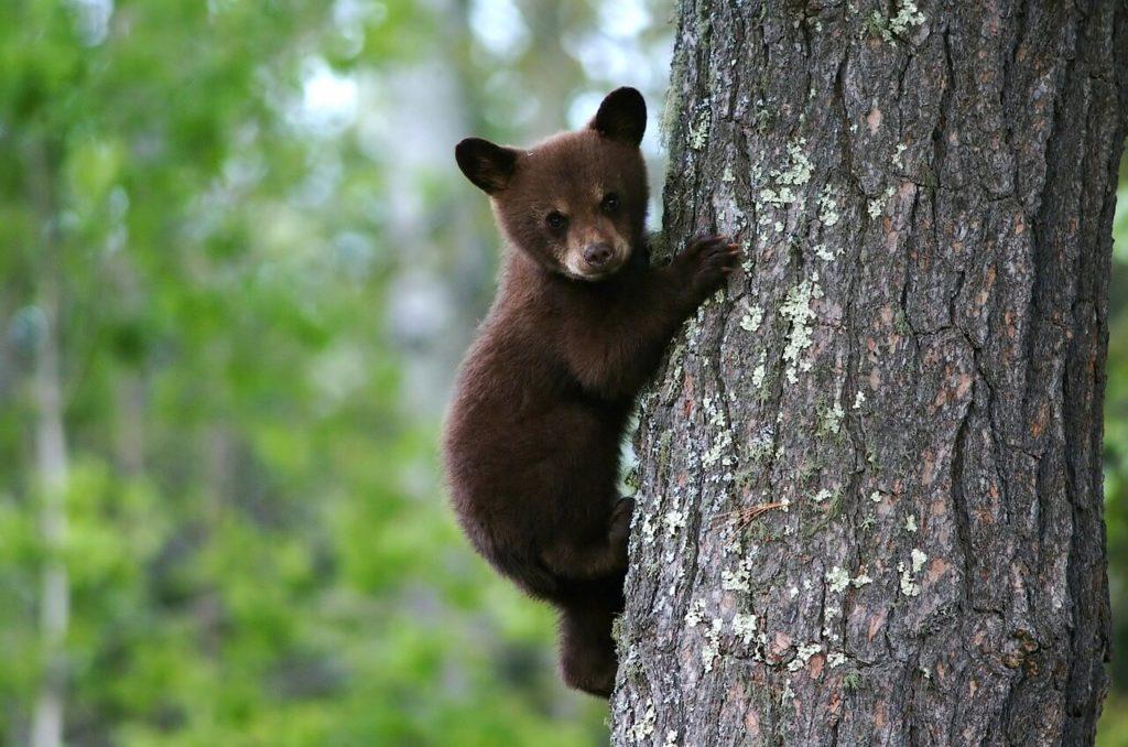 Die besten Rettungsaktionen gegen Bärenangriffe