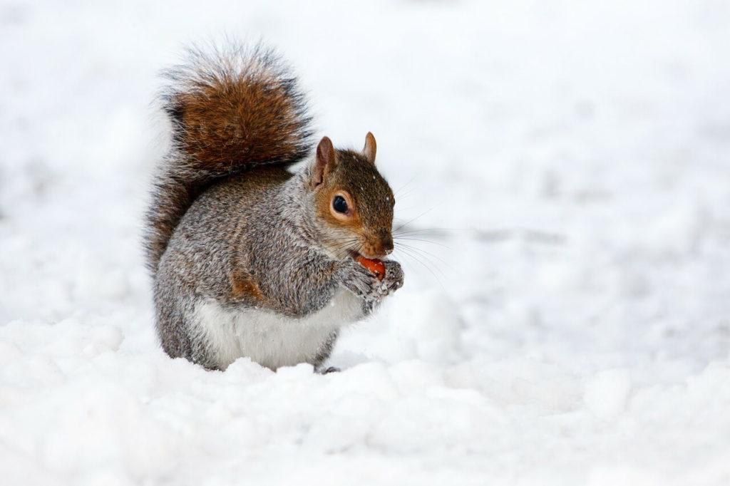 Schnee in Deutschland lässt Wildtiere verhungern
